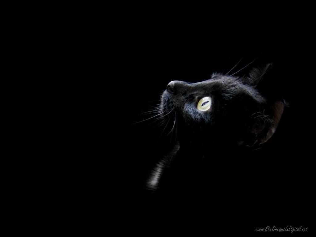 Gato Negro 02 by leugim77