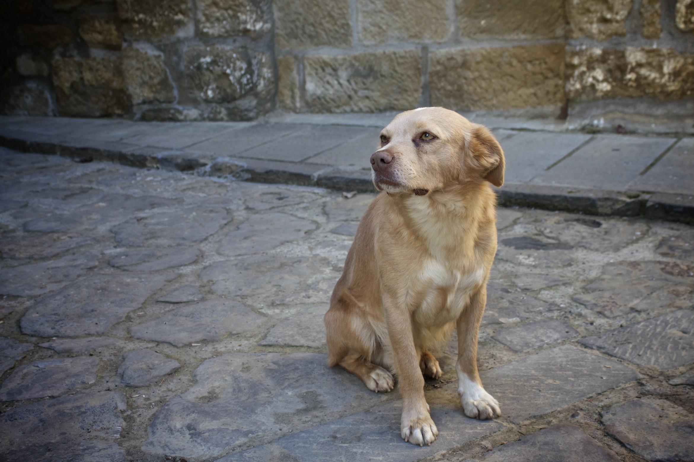Dog Stopped Having Seizures But Keeps Peeing Everywhere