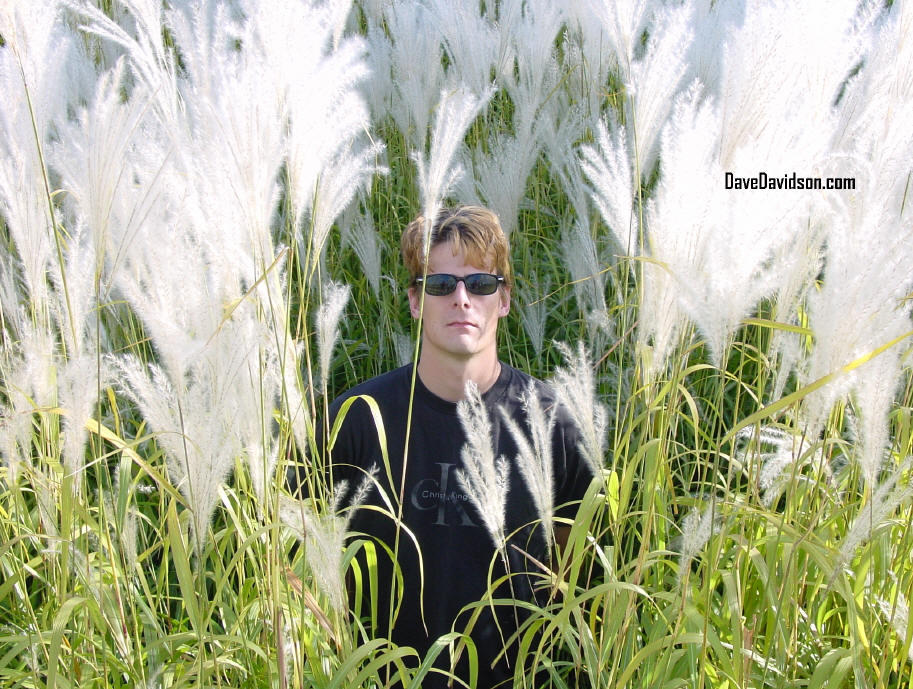 Dave in Tall Weeds