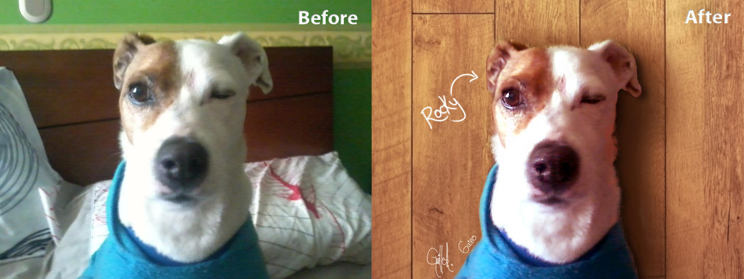 Wink Dog (Rocky) by imaGeac