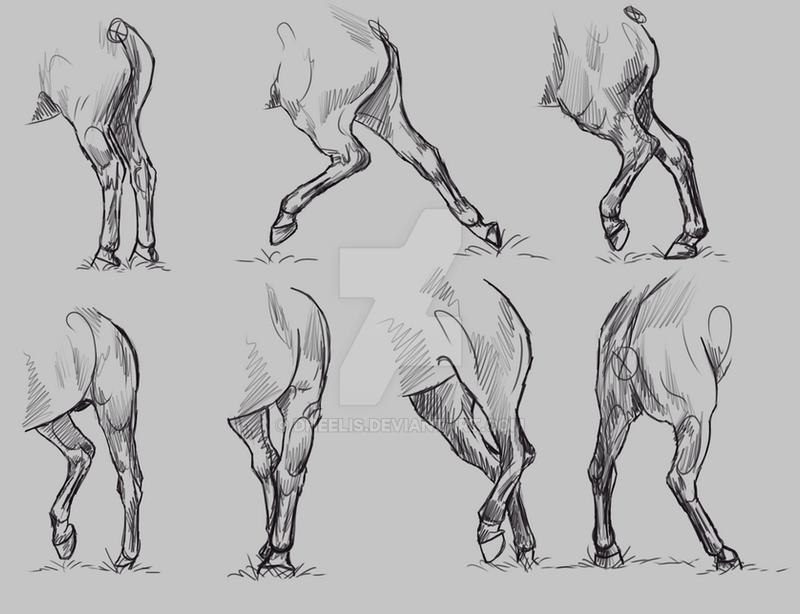 Study Horse Hindlegs By Dheelis On Deviantart