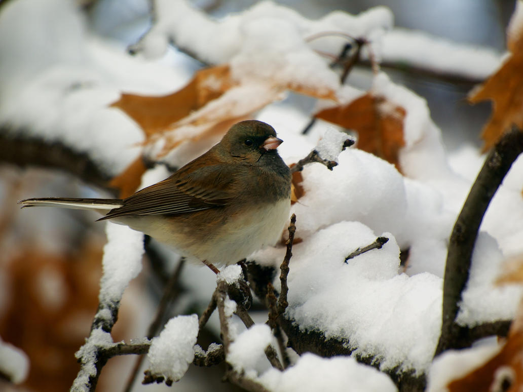Unknown Winter Bird by AquarianPhotography
