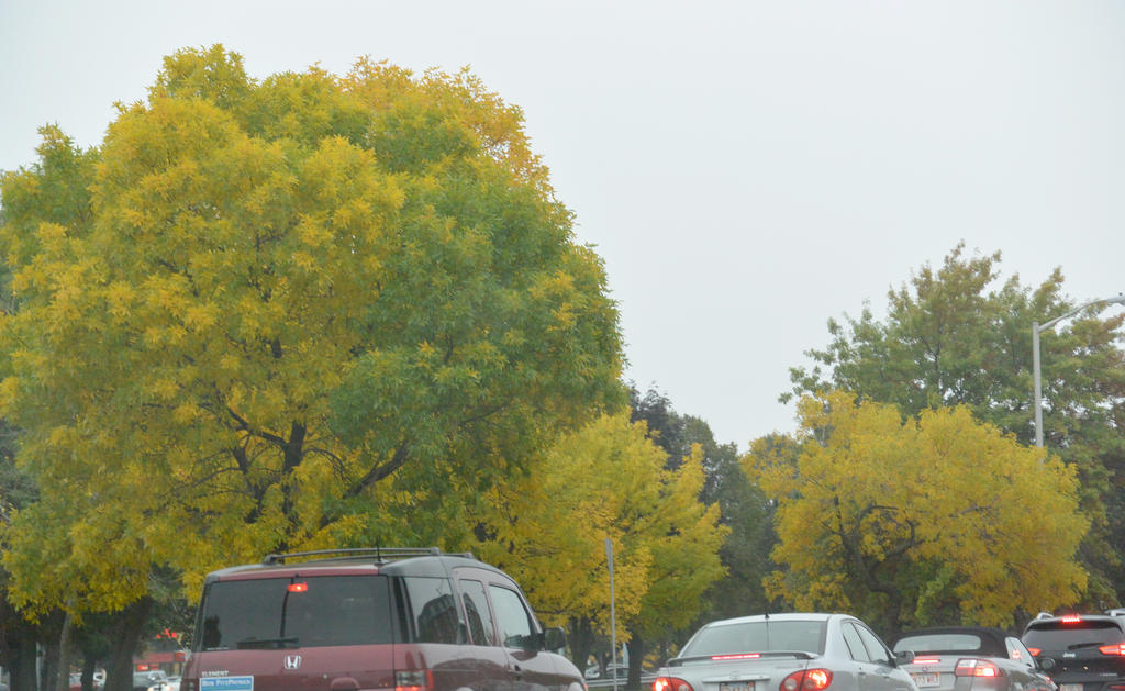2014 Natural Autumn Color 22 by Miss-Tbones