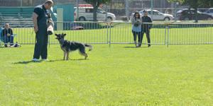 2014 Dog Festival, Schutzhund Session 18