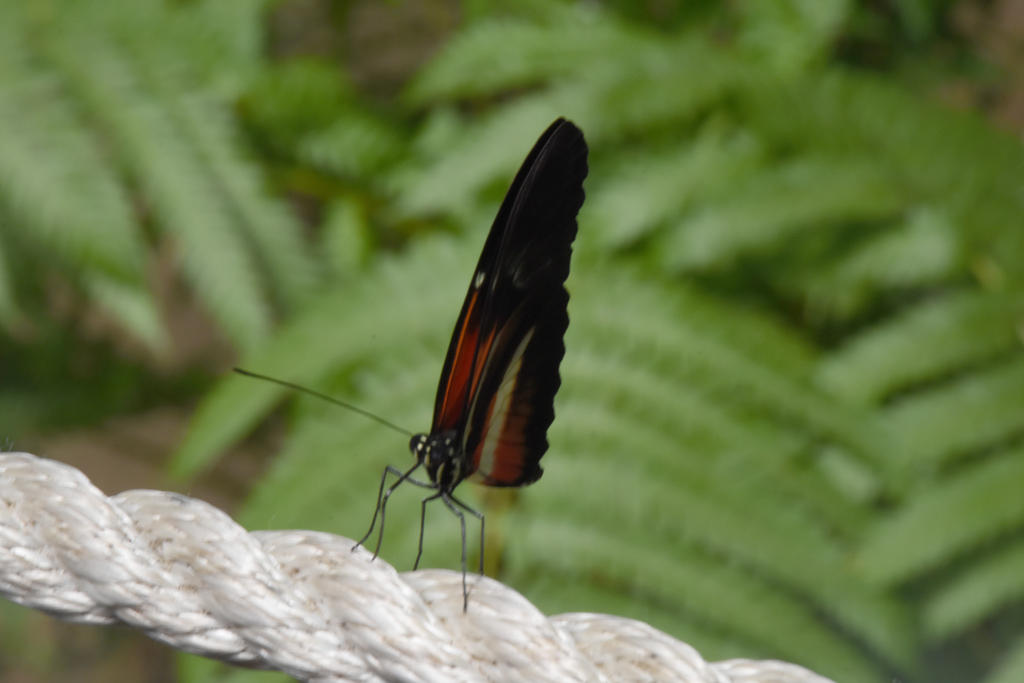 On A Tight Rope, Butterfly by Miss-Tbones