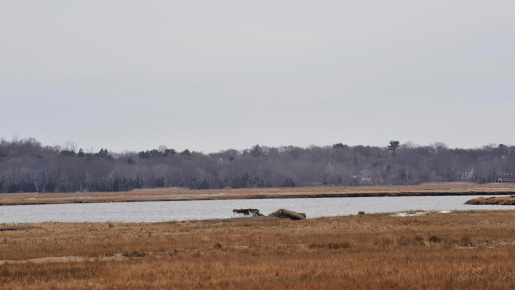 Plum Island Marshland 4 by Miss-Tbones