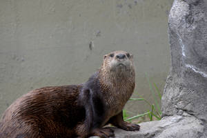 You Otter Get My Good Side by Miss-Tbones