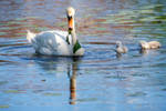 A Lilly Pad Lunch for the Swan Family 9
