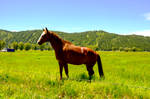 Horse Behind Fence and Mountains In the Background
