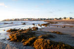 Beach Morning Light and Seaweed Piles 11