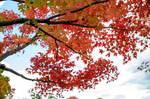 2020 Autumn Color 8