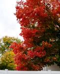 Somerville Autumn Color 12