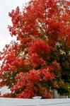 Somerville Autumn Color 14