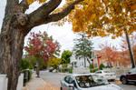 Somerville Autumn Color 19