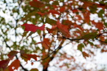 Color Leaf Jumble
