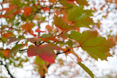 Color Leaf Jumble 2