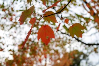 Color Leaf Jumble 3