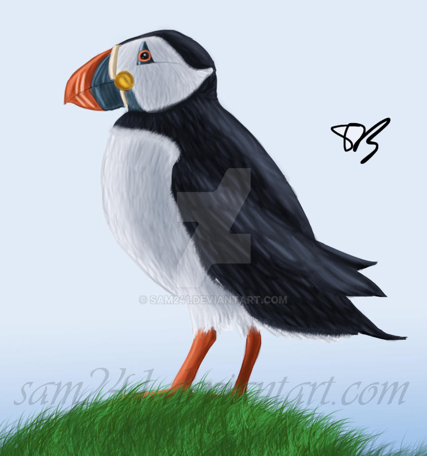 Puffin by sam241