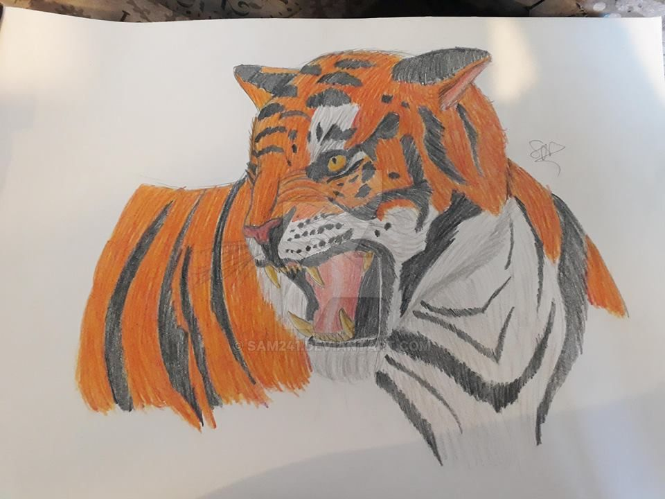 Tiger by sam241