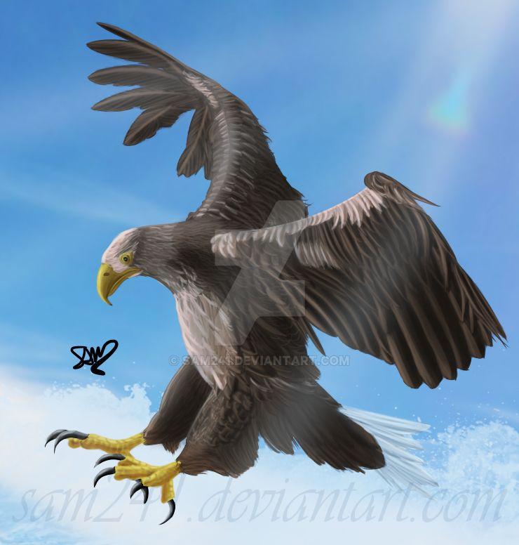 White-tailed Sea Eagle by sam241