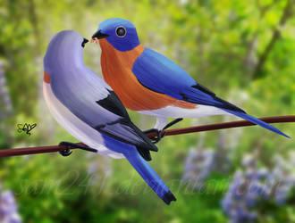 Eastern Bluebirds by sam241