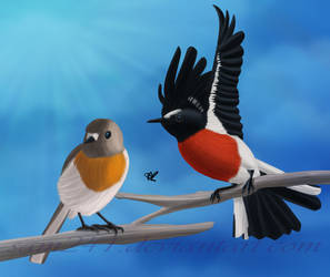 Scarlet Robins by sam241