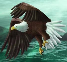 Bald Eagle by sam241