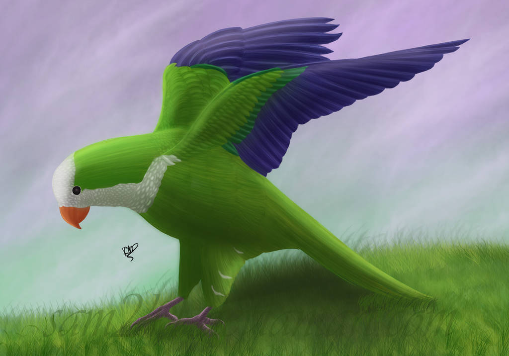 Monk Parakeet by sam241