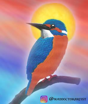 Kingfisher Mixed