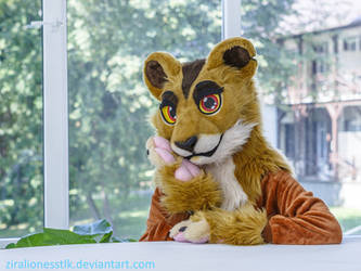 My FurSuit Zira Lioness 2019