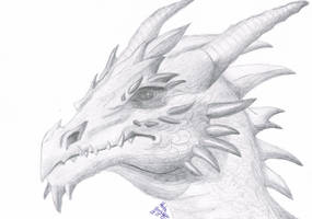 dragon's head by RudaDragon