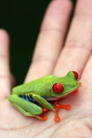 Tree Frog by jkeesh
