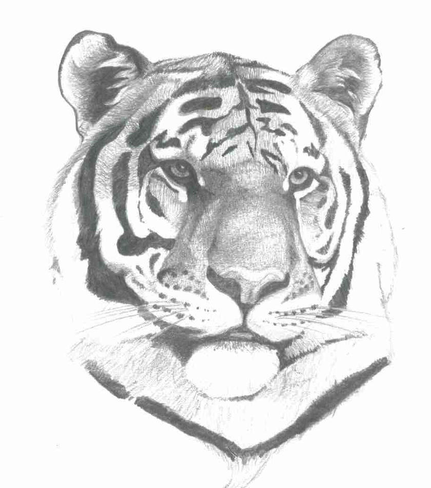 Tiger by ObsequiousKid