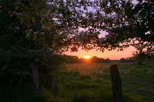 Cherry tree at sunset by KajiyaEol