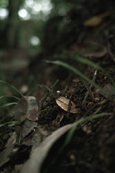 small small mushroom by sirauo