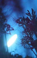 Lycoris : blue by sirauo