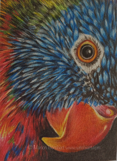 ACEO #62 Parrot by WitchiArt