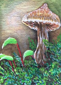 Mushroom Duftender Guertelfuss