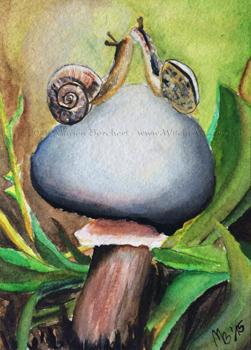 #71-Snaillove