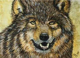 #76 European wolf