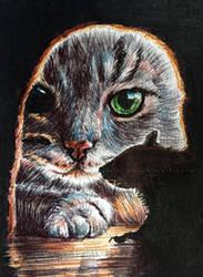 #77 Cat TV