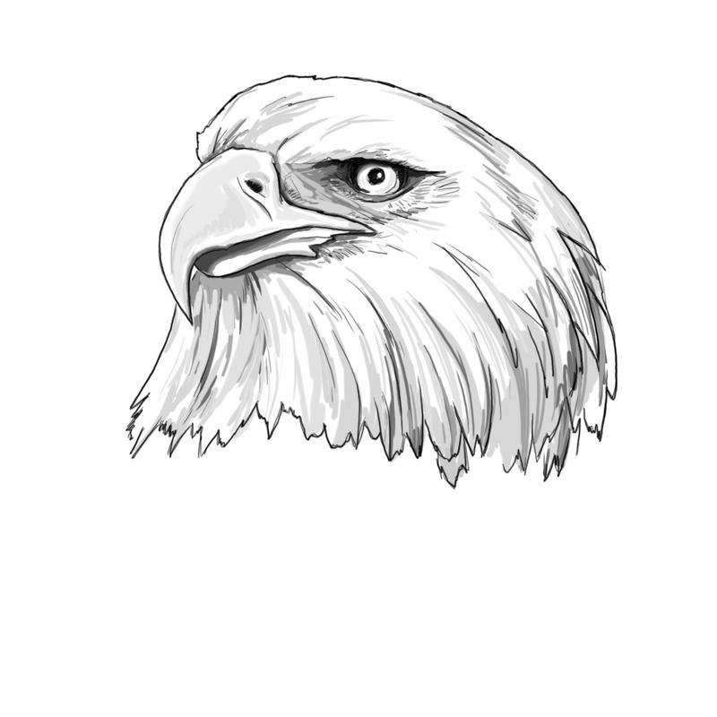 Eagle sketch by arisechicken117