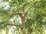 Tree Looking Down