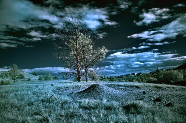 Infrared trees by danny-valentine