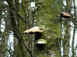 Fungus on Trees 02