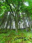 Kielder Forest Trees 02
