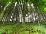 Kielder Forest Trees 03