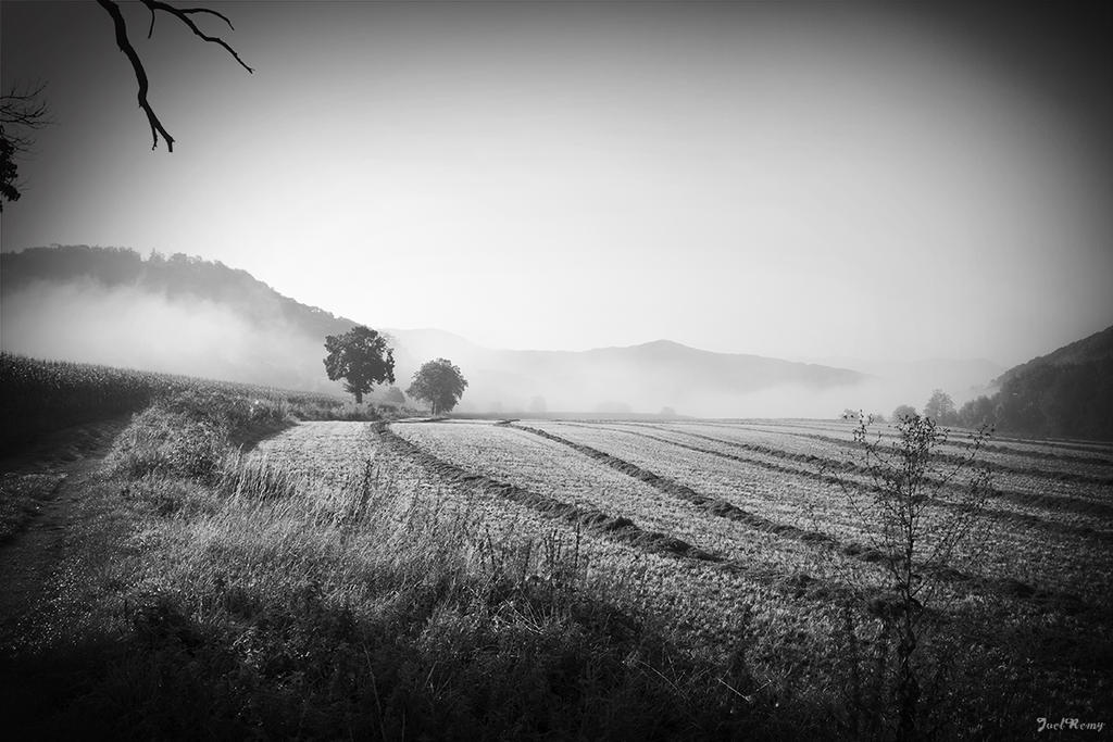 Fields and fog by JoelRemy222