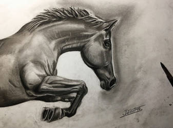Horse charcoal drawing by JohannDelestree