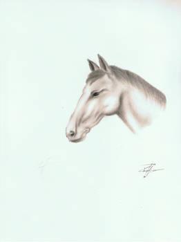 Horse-study